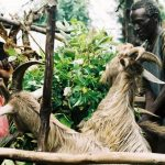 Why African Fact is Happier Than Fiction